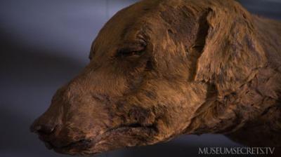 Múmia de um cão disponível para a visitação no Egyptian Museum do Cairo. Disponível em . Acesso em 13 de junho de 2013.