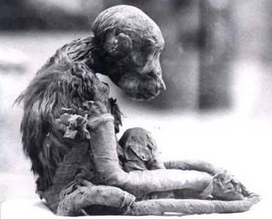 Múmia de macaco. Imagem disponível em . Acesso em 13 de junho de 2013.