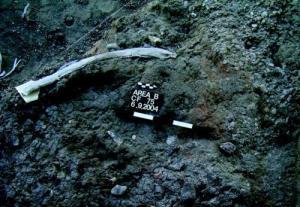 Costela de elefante contendo marcas de corte associada com ferramentas de sílex no sítio de Revadim. Crédito da imagem: American Friends of Tel Aviv University (AFTAU)