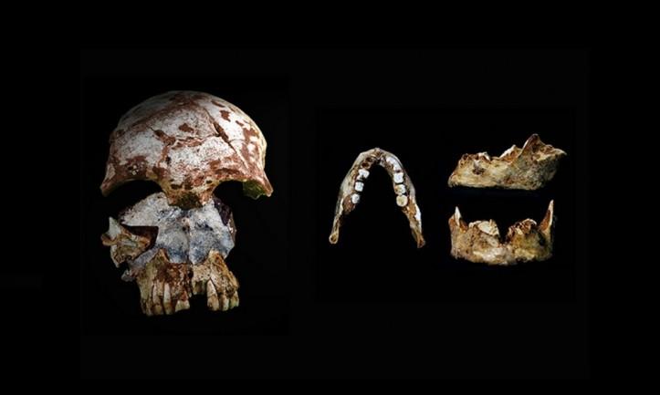 As investigadoras encontraram um crânio antigo humano, à esquerda, com características modernas, e uma mandíbula humana, à direita, com traços modernos e arcaicos, na mesma caverna no norte do Laos. Ambos os artefatos datam de 46.000 a 63.000 anos atrás. | Foto por Fabrice Demeter