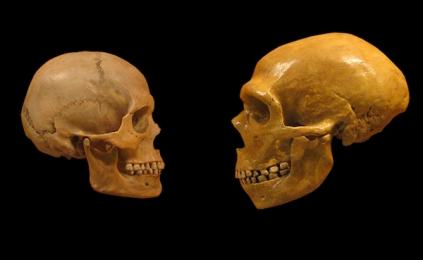 Resultado de imagem para Homo neanderthalensis